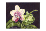 Vibrant Orchid II Prints by Gloria J. Callahan