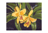 Vibrant Orchid I Posters by Gloria J. Callahan