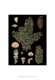 Dramatic Conifers I Poster