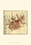 Coral Impressions II Prints