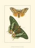 Papillion I Prints
