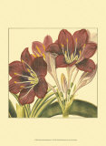 Poetic Blossoms I Prints