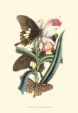Butterflies and Flora I Posters by John Westwood
