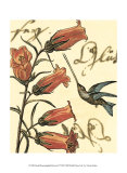Hummingbird Reverie II Affiche