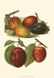 Plum Varieties I Print by John Wright