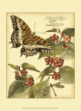 Whimsical Butterflies II Posters
