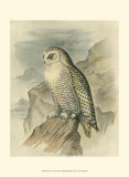 Snowy Owl Prints by F.w. Frohawk