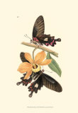 Butterflies and Flora II Posters by John Westwood