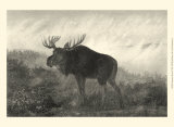 American Moose Posters by R. Hinshelwood