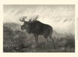 American Moose Posters by R. Hinshelwood