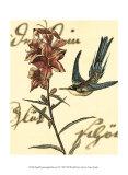 Hummingbird Reverie IV Posters