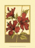 Sophisticated Hibiscus II Prints by Jennifer Goldberger