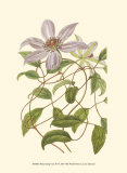 Blossoming Vine III Print by Sydenham Teast Edwards