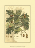Antique Oak Tree Prints by John Miller (Johann Sebastien Mueller) 