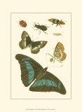 Papillion V Art