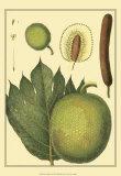 Exotic Melons I Print