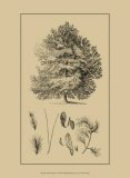 Arbor Study IV Art