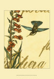 Peaceful Hummingbird II Posters