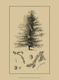 Arbor Study VI Affiches