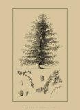 Arbor Study VI Kunstdrucke