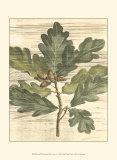Weathered Oak Leaves I Poster von Gerard Paul Deshayes