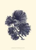 Indigo Kelp I Prints