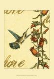 Peaceful Hummingbird I Prints
