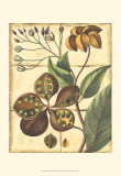 Rustic Garden II Posters
