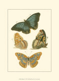 Papillion VI Posters