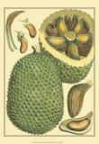 Exotic Melons II Prints
