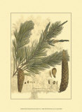 Antique Weymouth Pine Tree Print by John Miller (Johann Sebastien Mueller) 