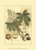 Antique Horse Chestnut Tree Poster by John Miller (Johann Sebastien Mueller) 