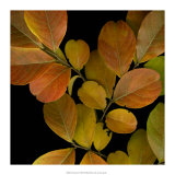 Vivid Leaves I Giclee Print