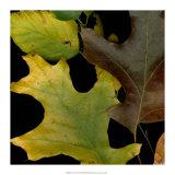 Vivid Leaves II Giclee Print