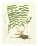 Eaton Ferns IV Giclee Print by Daniel C. Eaton