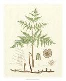 Eaton Ferns III Giclee Print by Daniel C. Eaton