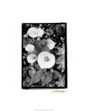 Floral Elegance II Premium Giclee Print by Laura Denardo