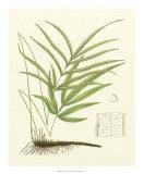Eaton Ferns I Giclée-Druck von Daniel C. Eaton