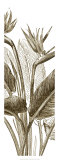 Bird of Paradise Triptych II Giclee Print