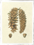 Crackled Woodland Pinecones III Giclee Print by  Silva