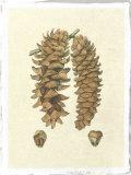 Crackled Woodland Pinecones III Premium Giclee Print by  Silva