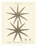 Striking Starfish III Art