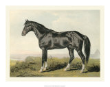 Cassell's Horse II Giclee Print by  Cassell