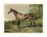 Cassell's Horse IV Giclee Print by  Cassell