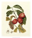 Island Fruits III Giclee Print by Berthe Hoola Van Nooten