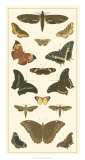 Cramer Butterfly Panel II Prints by Pieter Cramer