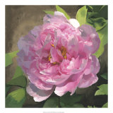 Peony in Pink I Giclee Print by Megan Meagher