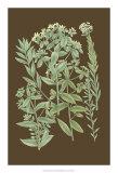 Organic Greenery I Giclee Print by Johann Wilhelm Weinmann