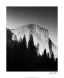 El Capitan in Trees Giclee Print by Bradford Smith