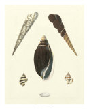 Knorr Shells VI Giclee Print by George Wolfgang Knorr